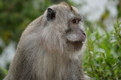 Monkey. In jungle surroundings with interesting facial expression Stock Photo