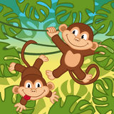Monkey in jungle Stock Photos