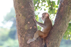 Monkey in Kam Shan Country Park, Kowloon Stock Photo