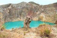 Monkey on Kelimutu with lake Tin Royalty Free Stock Photo