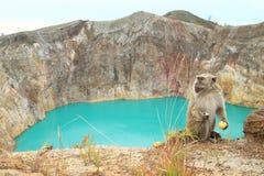 Monkey on Kelimutu by lake Tin stock photo