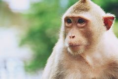 Monkey at Khao Kheow Open Zoo, Pattaya Thailand royalty free stock photos
