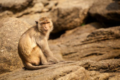 Monkey in Khao Takiab temple Royalty Free Stock Images