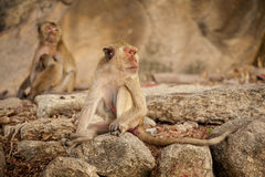 Monkey in Khao Takiab temple Stock Photo