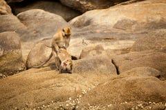 Monkey in Khao Takiab temple Royalty Free Stock Photos