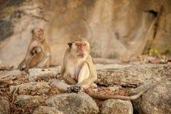 Monkey in Khao Takiab temple Royalty Free Stock Photo