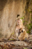Monkey in Khao Takiab temple Stock Photography