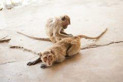 Monkey in Khao Takiab temple Stock Photos