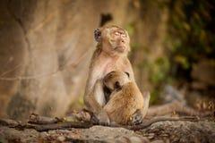 Monkey in Khao Takiab temple Royalty Free Stock Image