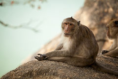 Monkey in Khao Takiab temple Stock Photography