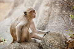 Monkey in Khao Takiab temple Royalty Free Stock Photography