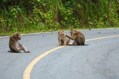 Monkey at Khao Yai National Park. Family of Monkey at Khao Yai National Park, Thailand Stock Photo