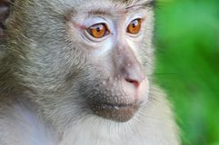 Monkey in Khao Yai National Park, Thailand Stock Photos