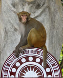 Monkey King. The monkey king sitting on the brand of Mount Longhu  scenic spot, staring at the visitors Stock Image