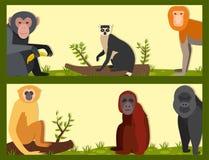 Monkey l'illustration sauvage de vecteur de chimpanzé de singe de zoo de différents pains d'animal de caractère Photographie stock libre de droits