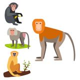 Monkey l'illustration sauvage de vecteur de chimpanzé de singe de zoo de différents pains d'animal de caractère Illustration Stock