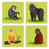 Monkey l'illustration sauvage de vecteur de chimpanzé de singe de zoo de différents pains d'animal de caractère Photos stock