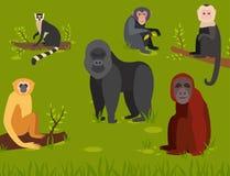 Monkey l'illustration sauvage de vecteur de chimpanzé de singe de zoo de différents pains d'animal de caractère Photos libres de droits