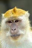 Monkey la cara Imagenes de archivo