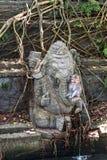 Monkey la foresta, Ubud, Bali, Indonesia Immagini Stock