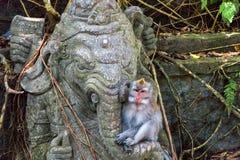 Monkey la foresta, Ubud, Bali, Indonesia Fotografia Stock Libera da Diritti