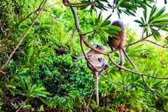 Monkey la isla en Cat Ba, bahía larga de la ha en la silueta de Vietnam Foto de archivo