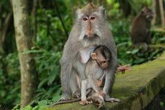 Monkey la madre Fotografia Stock Libera da Diritti