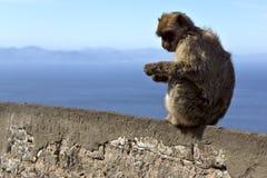 Monkey la seduta su un recinto di pietra sui precedenti del mare Immagini Stock Libere da Diritti