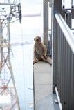 Monkey la seduta sulla stazione superiore della cabina di funivia di Gibilterra Fotografie Stock Libere da Diritti