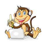 Monkey Laptop Stock Images