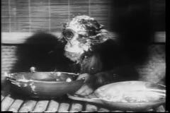 Monkey le bol de versement de nourriture sur sa tête banque de vidéos