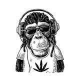 Monkey le hippie avec des dreadlocks dans les écouteurs, les lunettes de soleil et le T-shirt Photographie stock