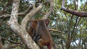 Monkey le macaque chez les singes de forêt tropicale dans l'environnement naturel photo stock