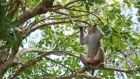 Monkey le macaque chez les singes de forêt tropicale dans l'environnement naturel photographie stock