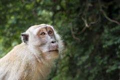 Monkey le visage Image stock