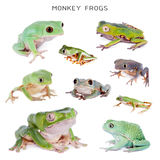 Monkey Leaf Frogs set on white Royalty Free Stock Images