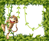 A monkey in a leafy frame Stock Photos