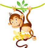Monkey on liana. With banana royalty free illustration