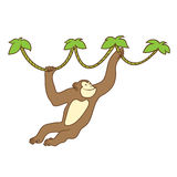 Monkey on liana Stock Photo