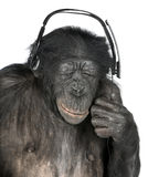 Monkey listening music closed eyes Royalty Free Stock Photos