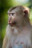 The monkey Stock Images