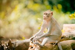 Monkey lives in nation park in Thailand Stock Photo