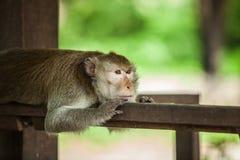 Monkey lonely Stock Photos