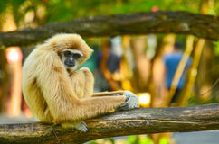 Monkey. Lonely sitting on a branch Stock Photo