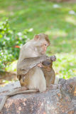 The Monkey  Long-Tailed Macaque  is take care. Her sweet baby with love Royalty Free Stock Image