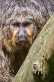 Monkey looking back at you Stock Photos