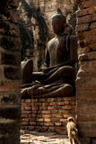 Monkey looking statue buddhism Royalty Free Stock Photo