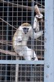 Monkey looking through zoo Stock Photo
