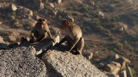 Monkey looks around at dawn sitting on a rock in mountains stock video