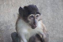 Monkey looks me Stock Photos